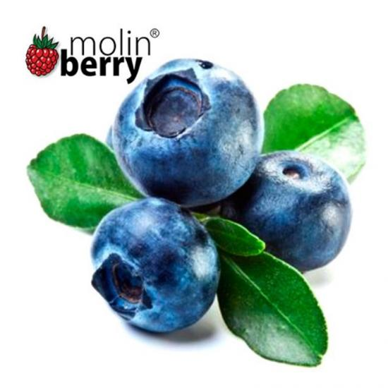 Molinberry Blueberry 10ml
