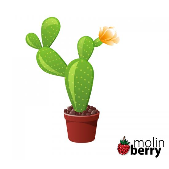 Molinberry Cactus 10ml